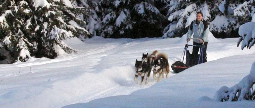 Mushing, Dog Sledding